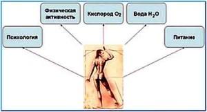 wellness-koncept